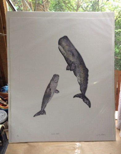 Finished Sperm Whales, printed & hand coloured